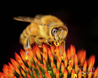 Photograph - Macro Photography - Bees - 12 by Terry Elniski