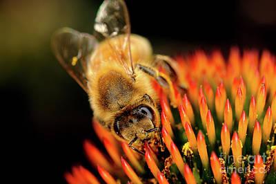Photograph - Macro Photography - Bees - 13 by Terry Elniski