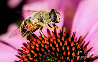 Photograph - Macro Photography - Bees - 15 by Terry Elniski