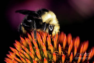 Photograph - Macro Photography - Bees - 16 by Terry Elniski