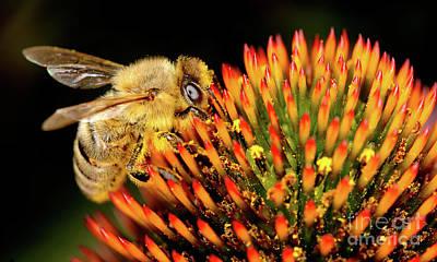Photograph - Macro Photography - Bees - 17 by Terry Elniski