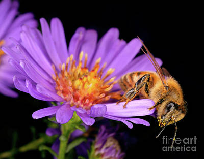 Photograph - Macro Photography - Bees - 18 by Terry Elniski