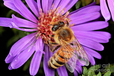 Photograph - Macro Photography - Bees - 19 by Terry Elniski