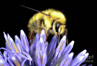 Photograph - Macro Photography - Bees 2 by Terry Elniski