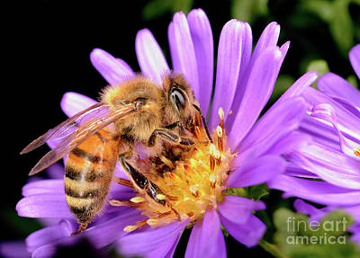 Photograph - Macro Photography - Bees - 20 by Terry Elniski