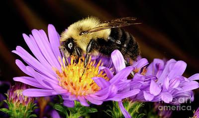 Photograph - Macro Photography - Bees - 21 by Terry Elniski