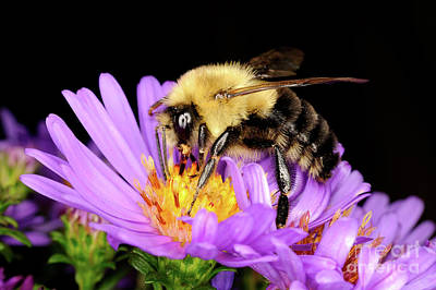 Photograph - Macro Photography - Bees - 22 by Terry Elniski