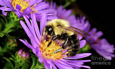Photograph - Macro Photography - Bees - 23 by Terry Elniski