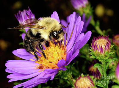 Photograph - Macro Photography - Bees - 24 by Terry Elniski