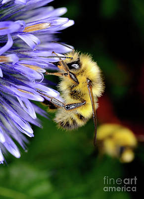 Photograph - Macro Photography - Bees 4 by Terry Elniski