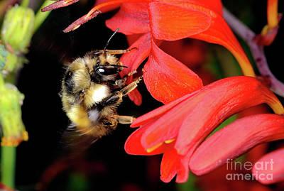 Photograph - Macro Photography - Bees 7 by Terry Elniski