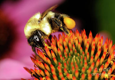 Photograph - Macro Photography - Bees - 9 by Terry Elniski