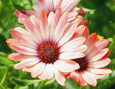 Macro Pink Cinnamon Tradewind Flower In The Garden Art Print by Amy McDaniel