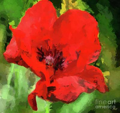Painting - Macro Poppy by Dragica Micki Fortuna