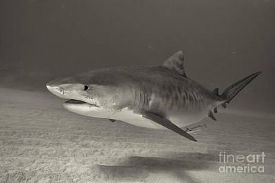 Photograph - Macro Predator by Aaron Whittemore
