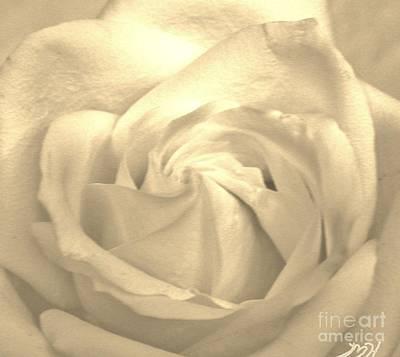 Macro Rose Original by Marsha Heiken