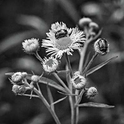Photograph - Macro Weed Watching 2 Bw by Steve Harrington