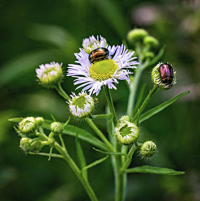 Photograph - Macro Weed Watching 2 by Steve Harrington