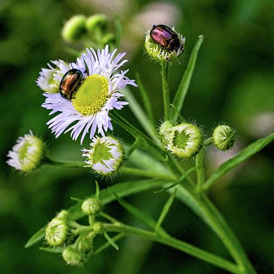 Photograph - Macro Weed Watching by Steve Harrington