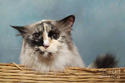 Mad Cat Art Print
