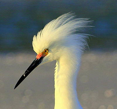 Photograph - Mad Egret by Sean Allen