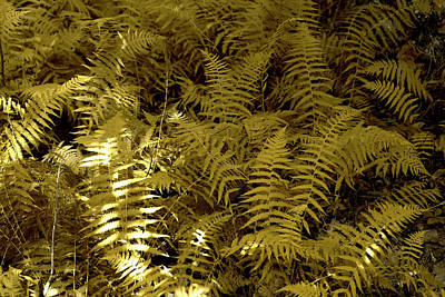 Photograph - Mad For Ferns by Sharon Popek