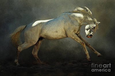 Photograph - Mad Horse by Dimitar Hristov