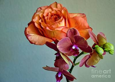 Photograph - Madame A. Meilland And Companion by Diana Mary Sharpton