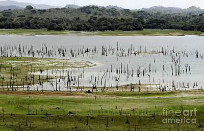 Travel Photograph - Madden Lake - Metropolitan Natural Park, Panama by Dani Prints and Images