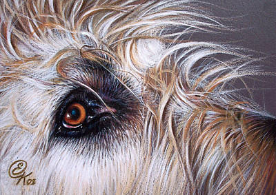 Dog Close-up Drawing - Maddie by Elena Kolotusha