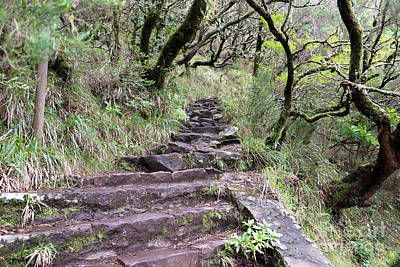Impressionist Landscapes - Madeira Levada Track by Compuinfoto