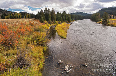 Photograph - Madison River by Cindy Murphy - NightVisions