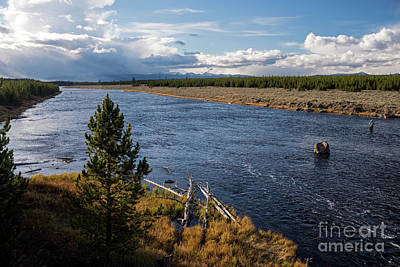 Photograph - Madison River In Yellowstone National Park by Cindy Murphy - NightVisions