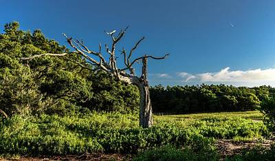 Photograph - Marsh Landscape by Bill Hosford