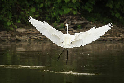 Photograph - Maestro Egret by Joni Eskridge