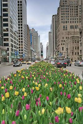 Comedian Drawings - Mag Mile Tulips by Josh Coleman