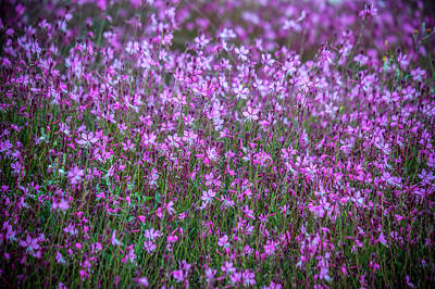 Photograph - Magenta Flora by David Hare