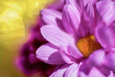 Photograph - Magenta Floral by Al Hurley