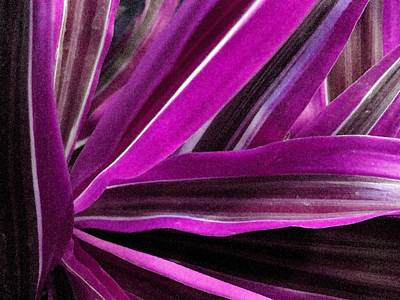 Photograph - Magenta Fronds by Carolyn Jacob