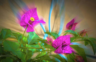 Photograph - Magenta Magic by Mark Dunton