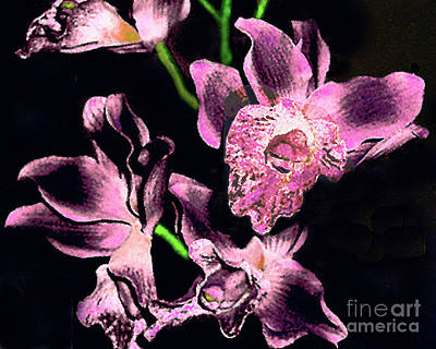 Photograph - Magenta Orchids  Digital Painting by Merton Allen