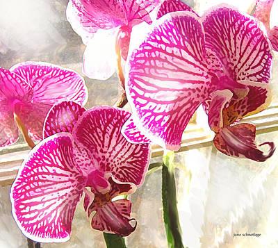 Orchid Digital Art - Magenta Orchids by Jane Schnetlage