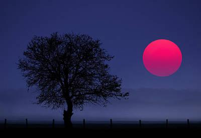 Photograph - Magenta Sun by Bess Hamiti