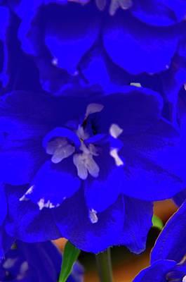 Photograph - Magestic Blue by Joe Burns