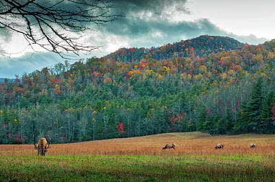 Maggie Valley Photograph - Maggie Valley In Autumn by Jordan Whitt