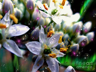 Photograph - Magic Blossoms by Nicole Angell