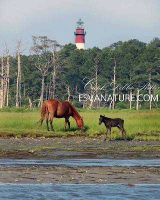 Photograph - Magic By The Lighthouse by Captain Debbie Ritter