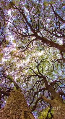 Photograph - Magic Canopy by Michael Tidwell