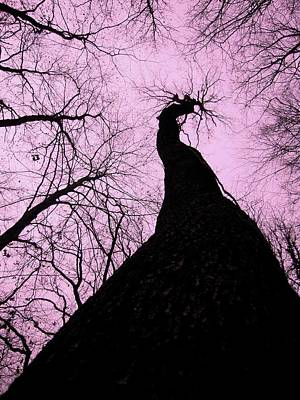 Magic Forest _3 Art Print