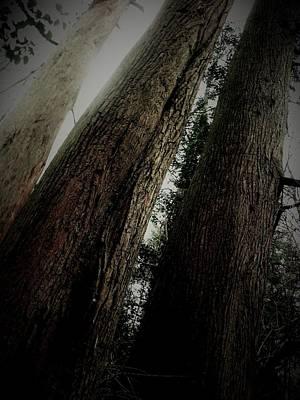 Magic Forest_1 Art Print